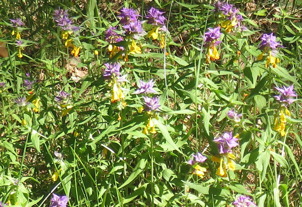 Flora im Wandertour in Aukštaitija Nationalpark