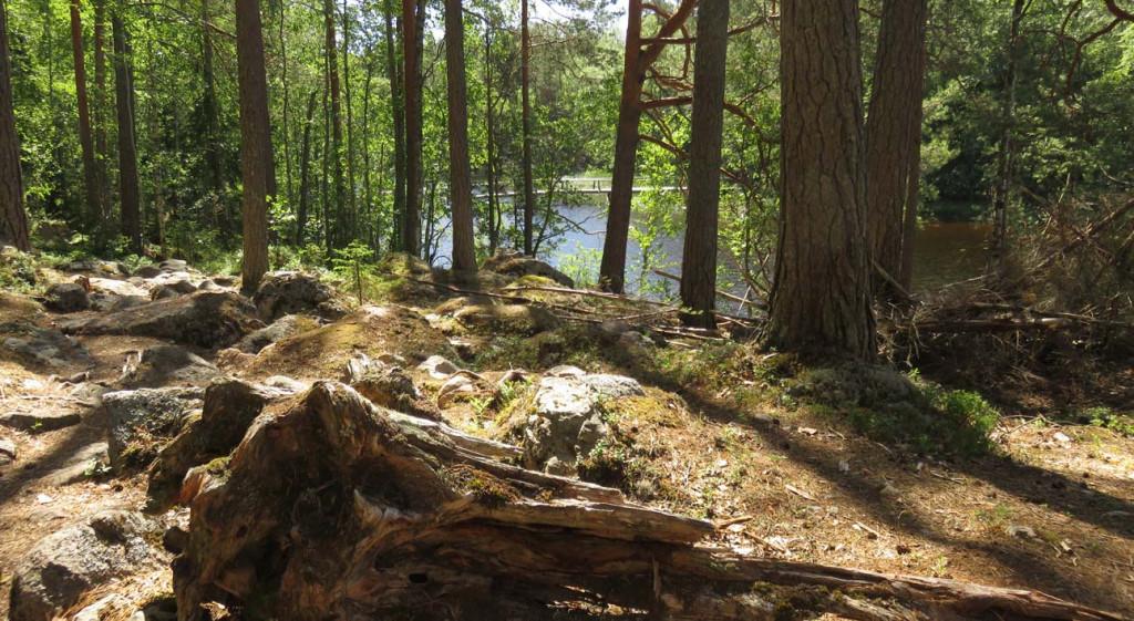 Wnaderung im Isojärvi Nationalpark