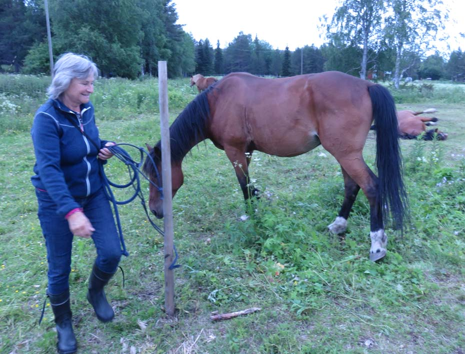 Trail Ride mit Arctic Nature Trips